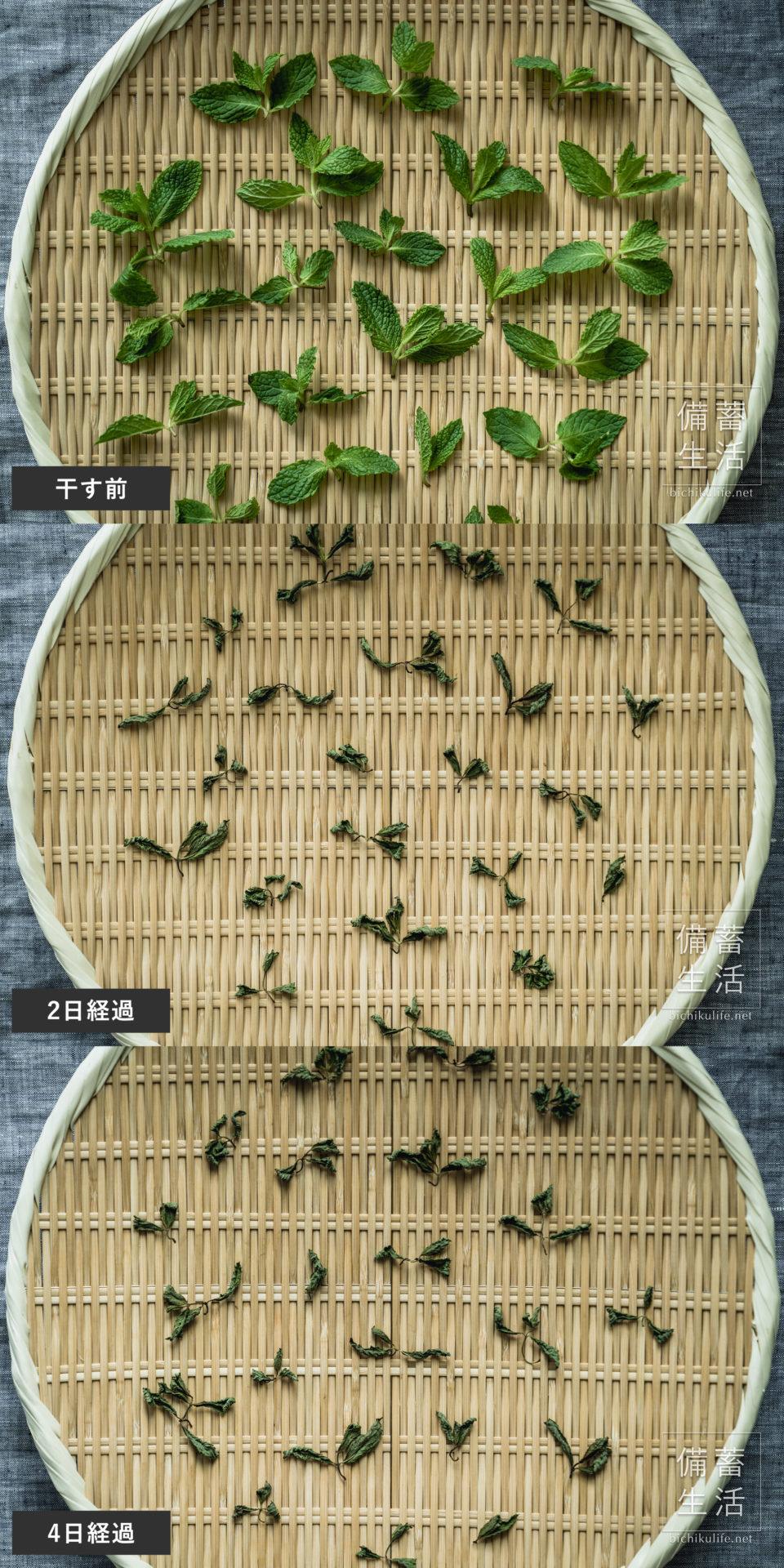 スペアミント 干し野菜づくり|干しスペアミントの作り方