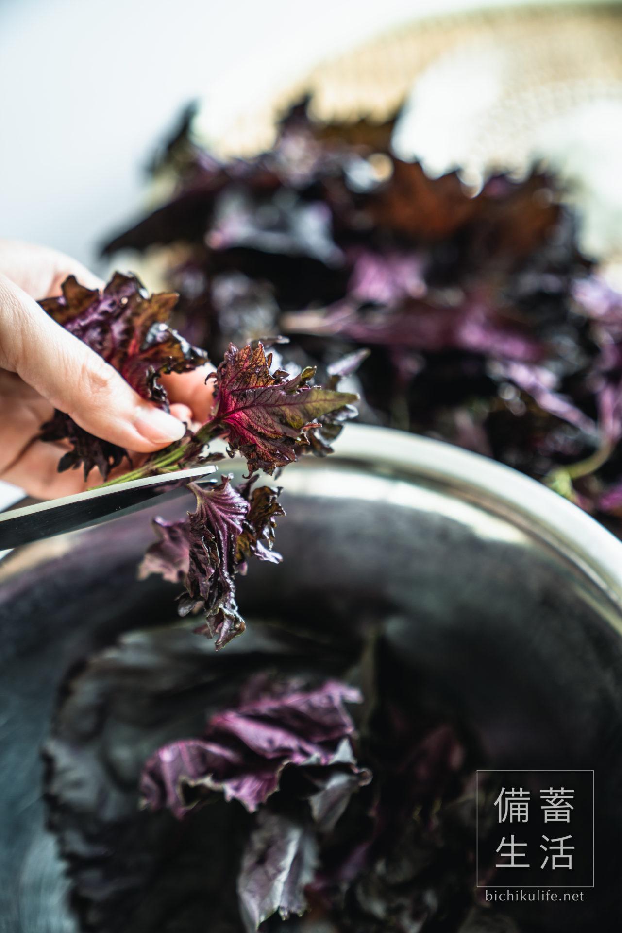 梅干しづくり 自家製梅干しを作るアイデア、赤じそを漬ける、赤じその茎をキッチンばさみで取り除く